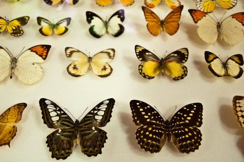 Butterflies display, Esapolis, Padua, Veneto, Italy - www.rossiwrites.com