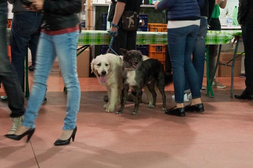 Dogs at the Pea Festival, Sagra dei Bisi, Lumignano, Veneto, Italy - www.rossiwrites.com