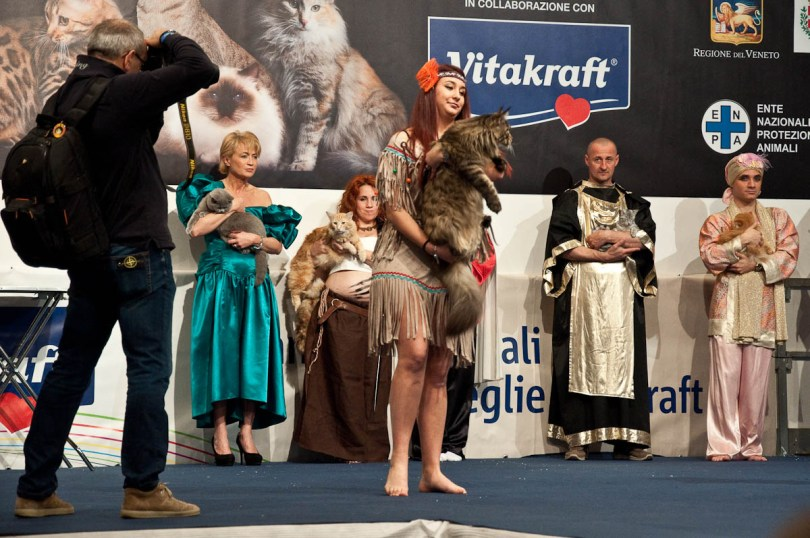 Maine Coon cat on the catwalk, Golden Cat Show, Vicenza, Italy www.rossiwrites.com