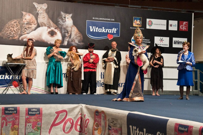 On the catwalk, Golden Cat Show 2016, Vicenza Fiera, Italy www.rossiwrites.com
