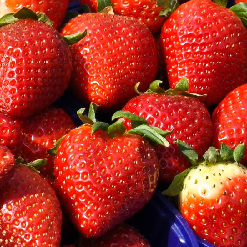 Strawberries at the market in Padua