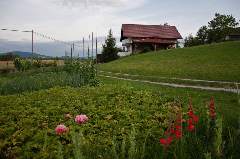 A beautiful local house with a vegetable patch at the front, Primostek, Slovenia - www.rossiwrites.com