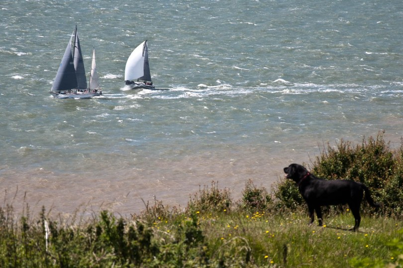 A dog watches the boats pass by, Round the island race 2016, Isle of Wight, UK - www.rossiwrites.com