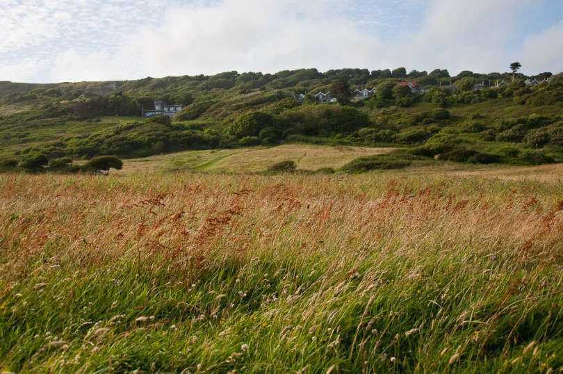Tall grass whipped by the wind with the coastguard cottages in the distance, Isle of Wight, UK - www.rossiwrites.com