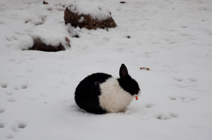 A rabbit with a piece of carrot - Parco Querini, Vicenza, Veneto, Italy - www.rossiwrites.com