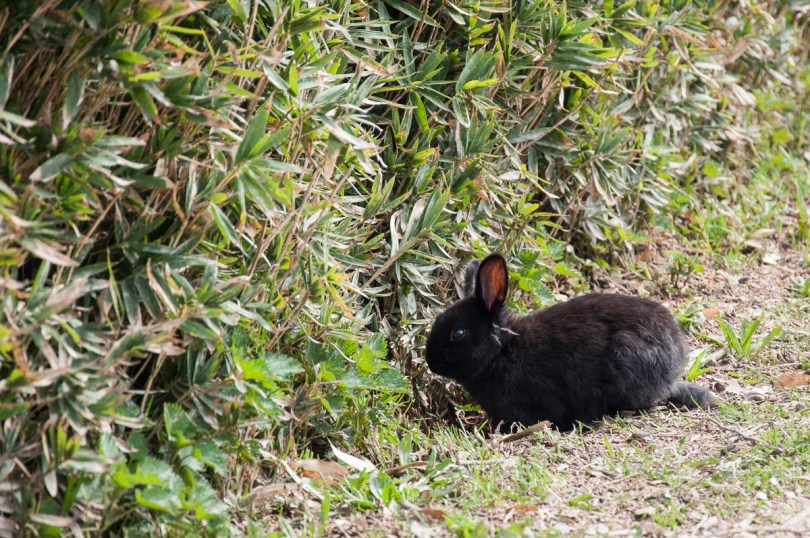 A little bunny - Parco Querini - Vicenza, Veneto, Italy - www.rossiwrites.com