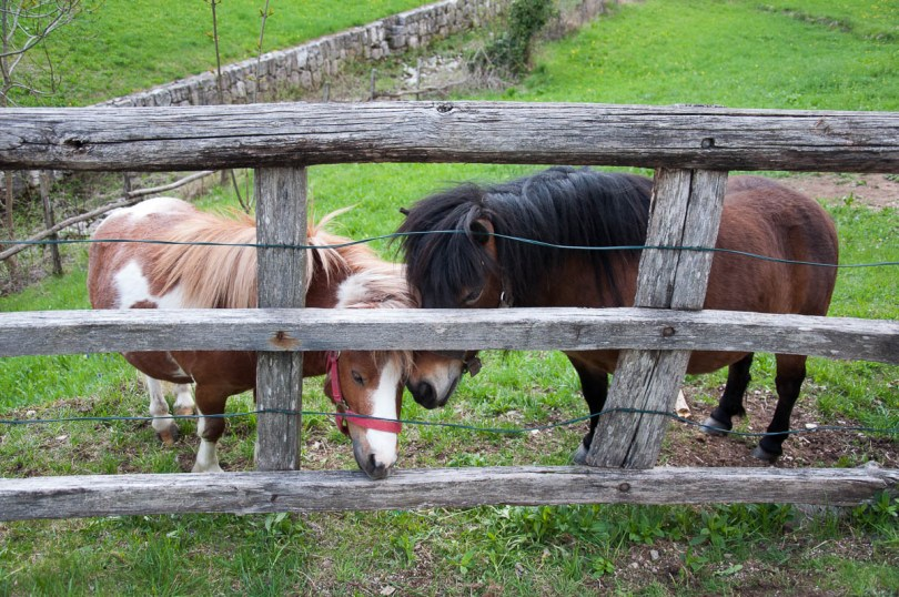 Gorgeous ponies - Laghi, Veneto, Italy - www.rossiwrites.com