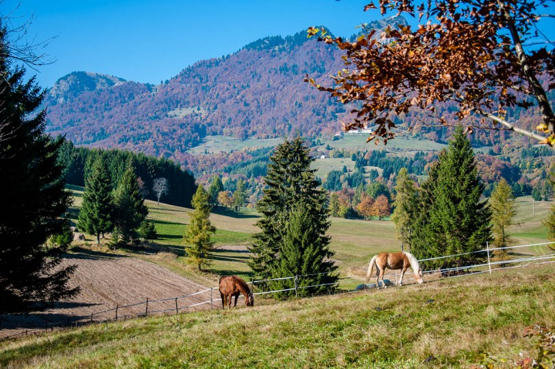 Horses grazing with Mount Spitz in the background - Tonezza del Cimone, Veneto, Italy - www.rossiwrites.com