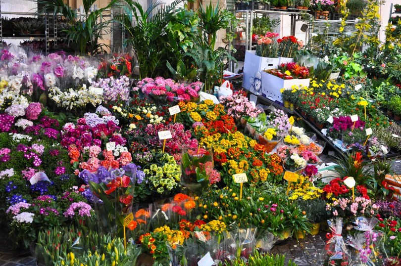 A market stall selling flowers and potted plants - Vicenza, Italy - www.rossiwrites.com