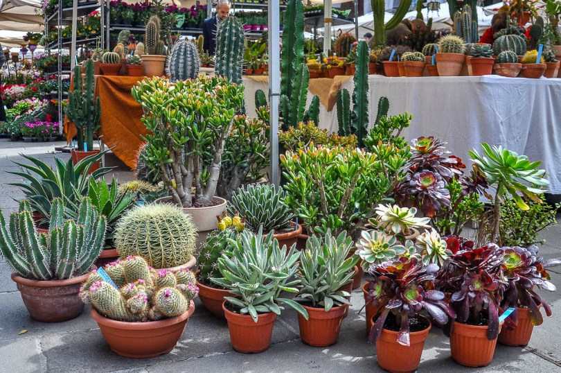 A market stall selling potted cacti - Vicenza, Italy - www.rossiwrites.com