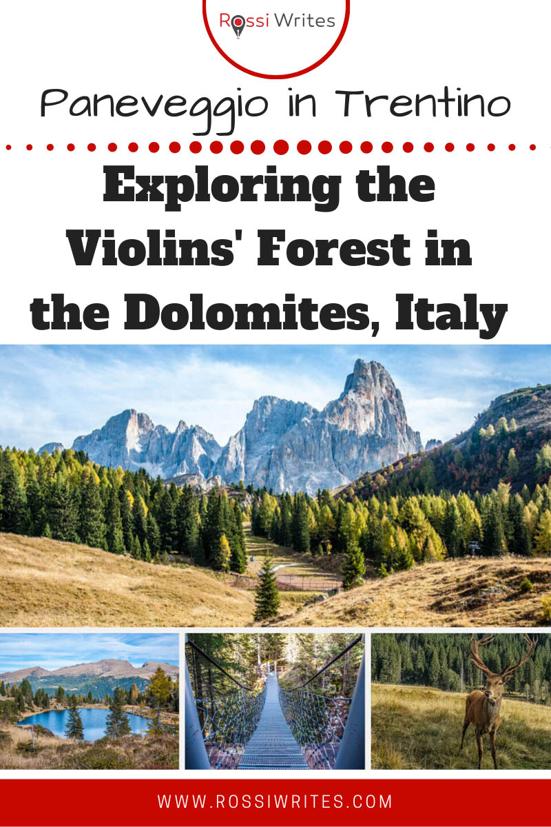 Pin Me - Paneveggio - Exploring the Violins' Forest in the Dolomites, Italy - rossiwrites.com