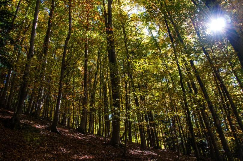 The forest - Excalibur Nature Walk - Tonezza del Cimone, Veneto, Italy - www.rossiwrites.com
