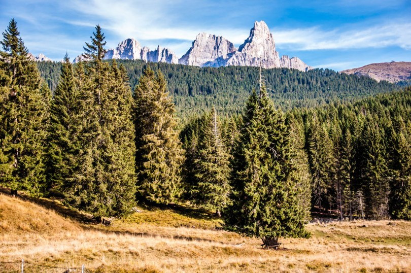 View of Paneveggio - The Violins' Forest - with the Pala di San Martino - Dolomites, Trentino, Italy - rossiwrites.com