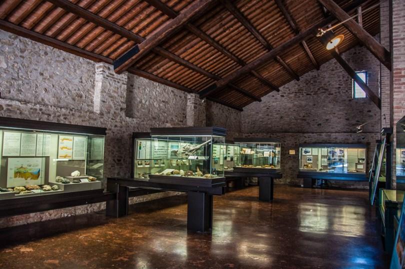 Cava Bomba Paleontological Museum - Cinto Euganeo, Euganean Hills, Padua, Italy - rossiwrites.com