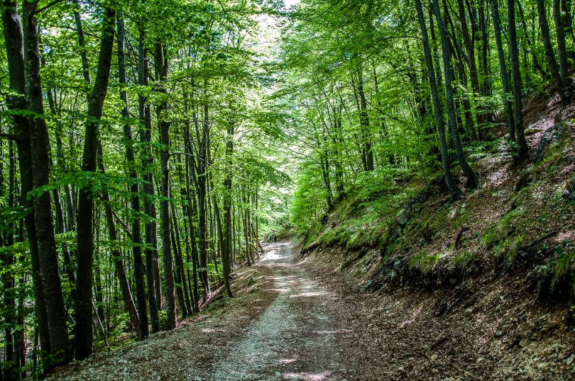 The hiking path through the forest - Sentiero dei Grandi Alberi - Province of Vicenza, Veneto, Italy - rossiwrites.com