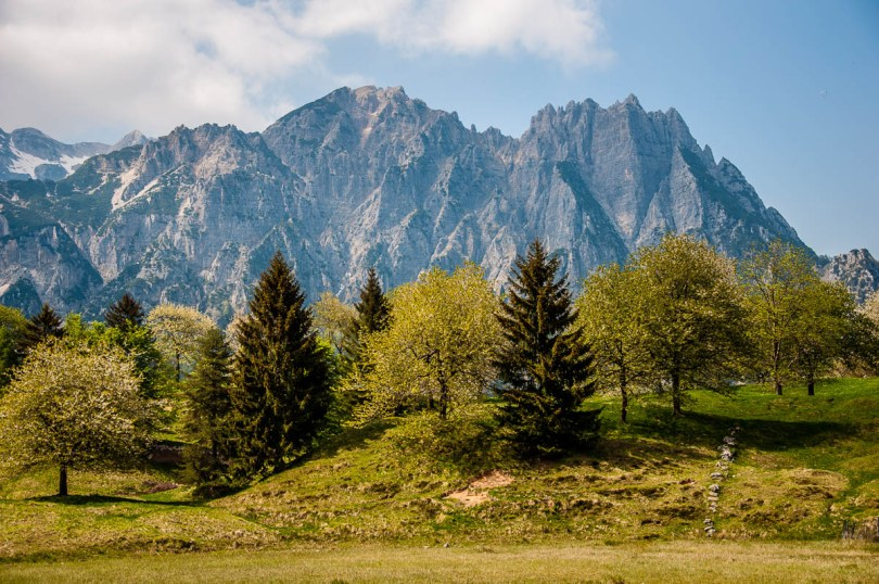 Trees with the rocky peaks of the Little Dolomites - Sentiero dei Grandi Alberi - Province of Vicenza, Veneto, Italy - rossiwrites.com