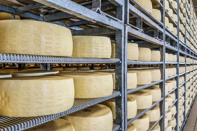 Asiago cheese wheels maturing inside a cheese factory - Bressanvido, Veneto, Italy - rossiwrites.com