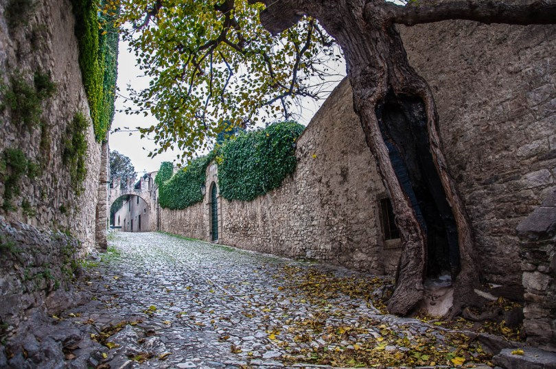 The cobbled street with the thick defensive wall and a hollowed tree - Punta di San Vigilio - Lake Garda, Italy - rossiwrites.com