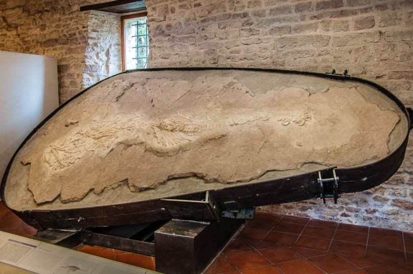The fossilised ichthyosaurus - Speleo-Paleontological and Archaeological Museum - San Vittore, Frasassi Caves, Italy - rossiwrites.com