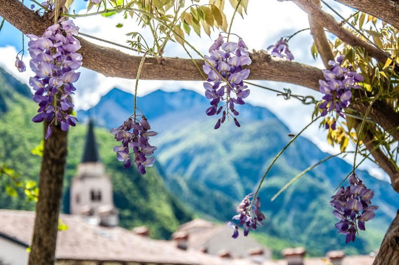 Wisteria with the bell tower and the mountains in the background - Venzone, Italy - rossiwrites.com