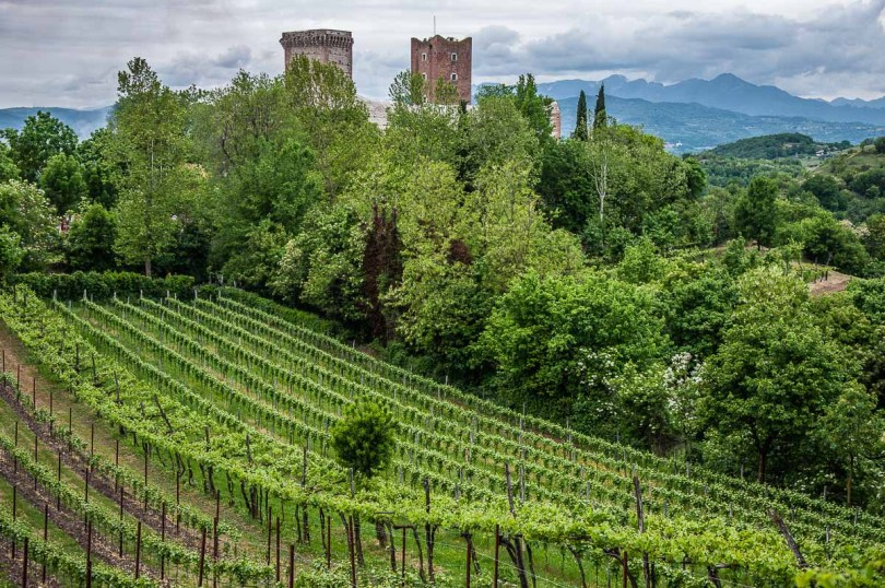 Romeo's Castle surrounded by lush vineyards - Montecchio Maggiore, Italy - rosssiwrites.com