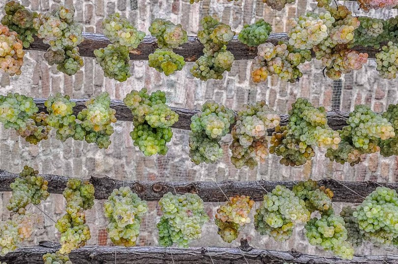 Hanging bunches of grapes - Veneto, Italy - rossiwrites.com