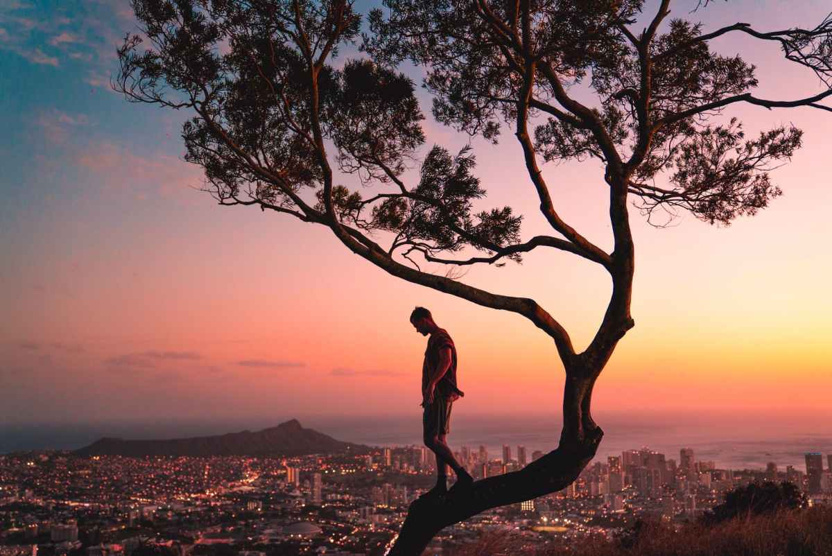 man standing on tree branch during sunset
