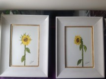 Two of the final four single sunflowers