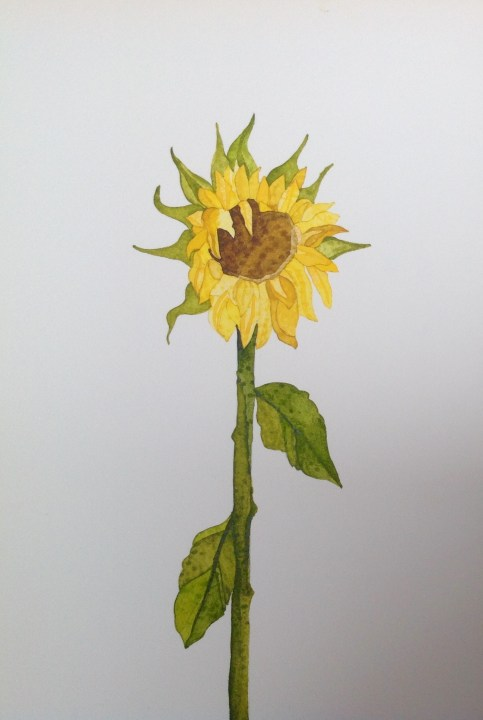 Sunflower I 19 x 28 cm Inks on Moulin du Roy Torchon. SOLD