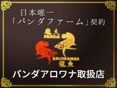 日本唯一 「パンダファーム」契約 パンダアロワナ取扱店