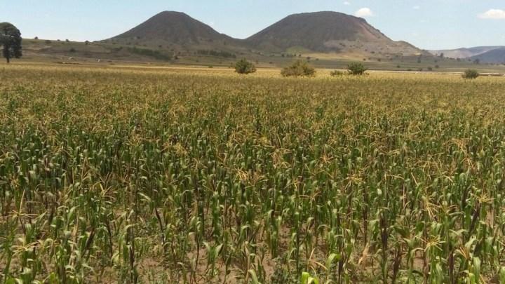 Austeridad republicana ha llevado a los productores del campo a una espiral de incertidumbre: Absalón García
