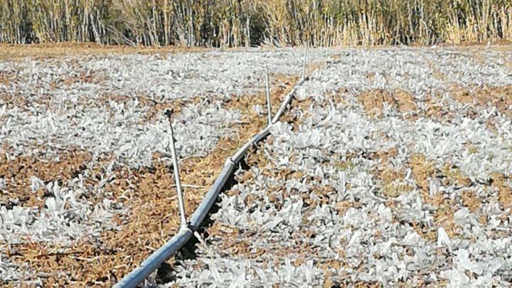 Más de 300 hectáreas de hortalizas se pierden por heladas en la Mixteca