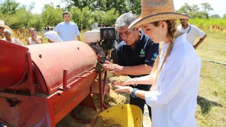 Impulsará gobierno del estado a productores de amaranto