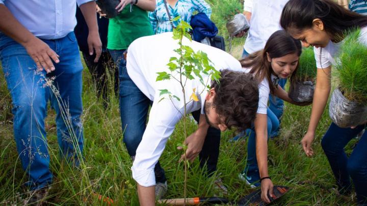 Plantará 40 mil árboles el Partido Verde para repoblar áreas naturales.