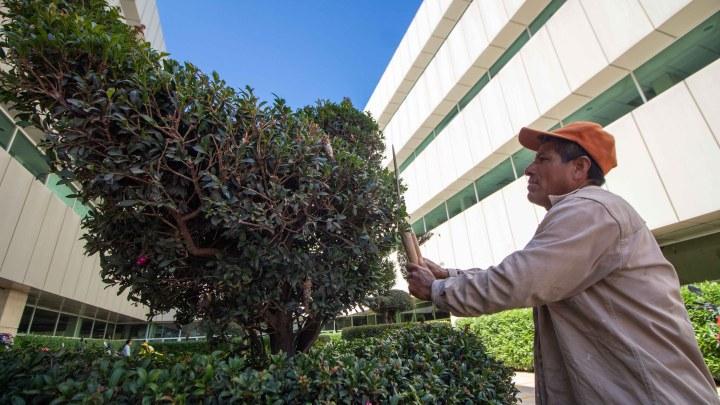 Las figuras extraordinarias de don Enrique, en los jardines