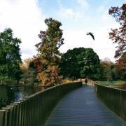 park london bridge bird trees autumn facilitation caring rotana ty