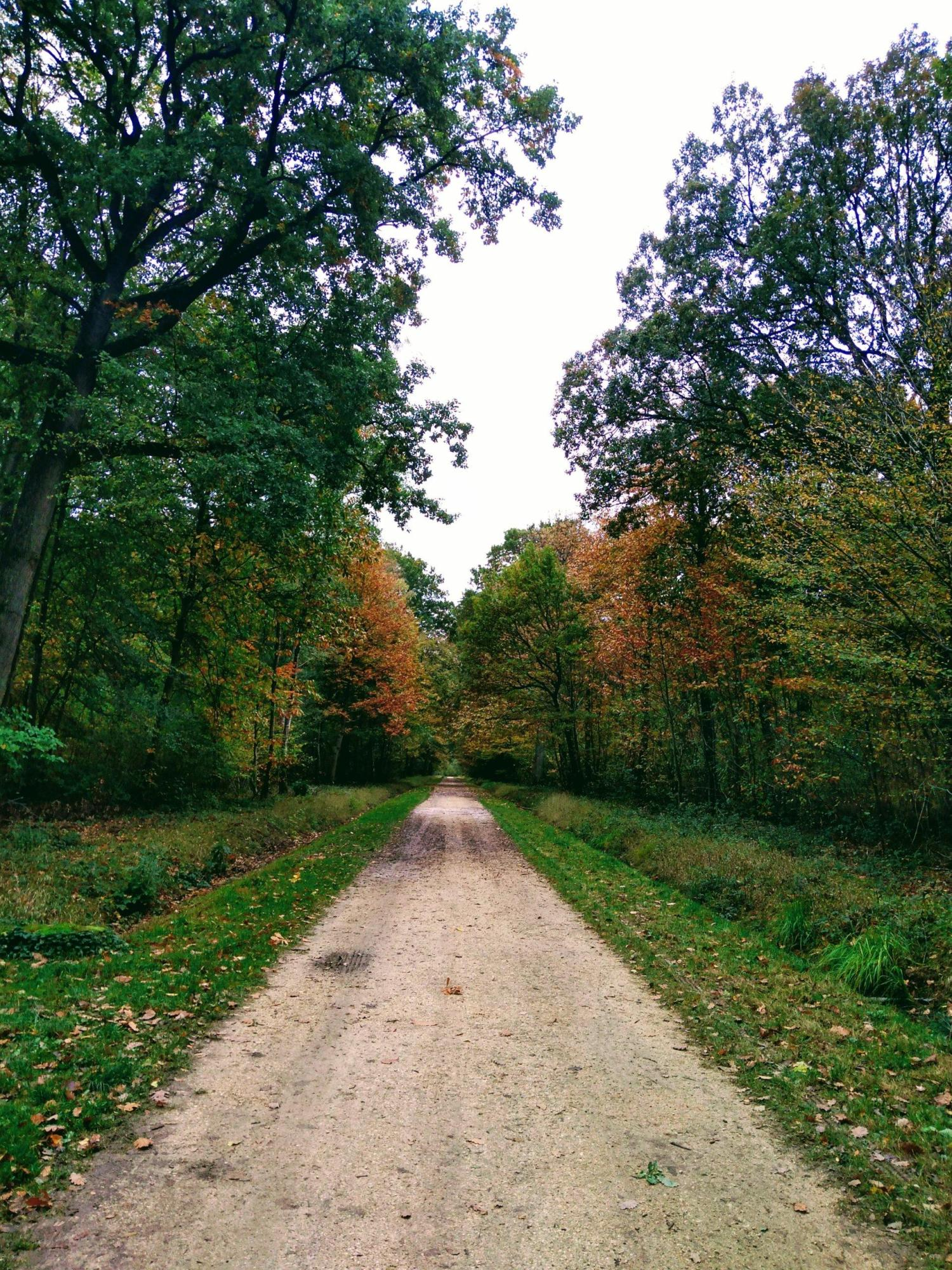 forest road path tree green autumn insights foresight curation rotana ty