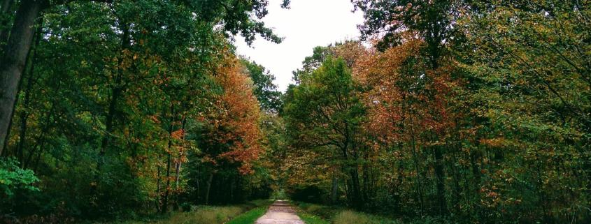 spotting forest road path tree green autumn insights foresight curation rotana ty