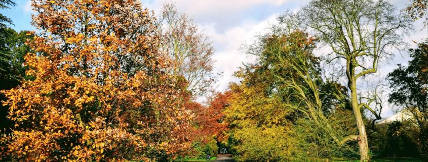 autumn london garden creativity ingenuity leadership learning rotana ty