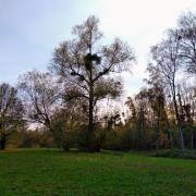 park tree autumn leadership learning health skills complexity change rotana ty