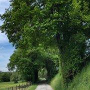 road countryside rotana ty
