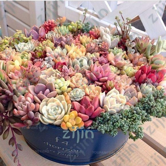 Rare Mix Lithops Flores – 203 SEEDS