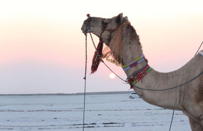 800_camel-sun2p-main