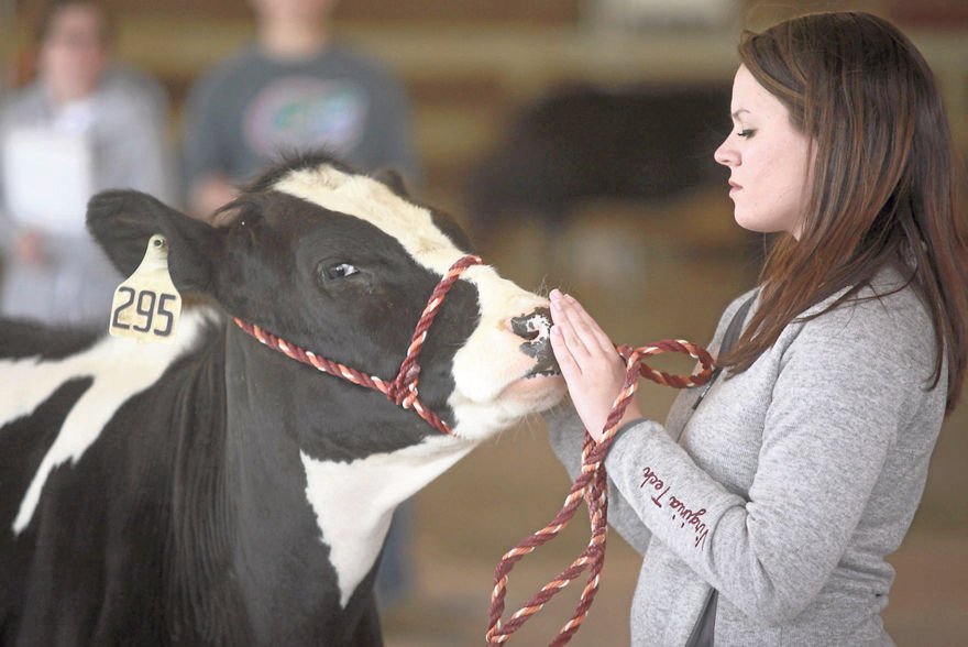 Kiss the Cow' fundraiser at Rocky Mount Rotary | ROTARY NEWS
