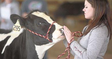 kiss-cow