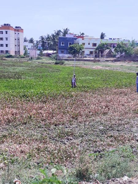 Puducherry Lake filled with water hyacinth.