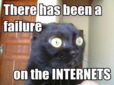 lolcats chat drole tête meme