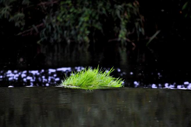 Grassy weir