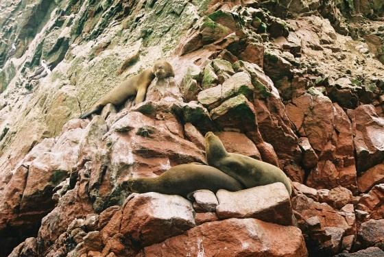 Sea lions on Islas Ballestas, Peru