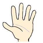 人差し指の下で切れる頭脳線